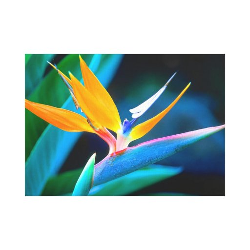Pássaro original bonito de canvas do paraíso impressão de canvas esticada