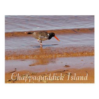 Pássaro raro no cartão da ilha de Chappaquiddick
