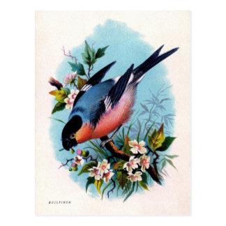 Pássaro retro do vintage no cartão do ramo
