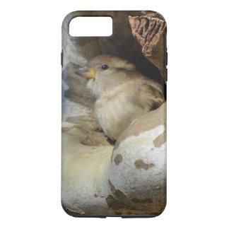 Pássaro selvagem que toma o cobrir dos ventos capa iPhone 8 plus/7 plus