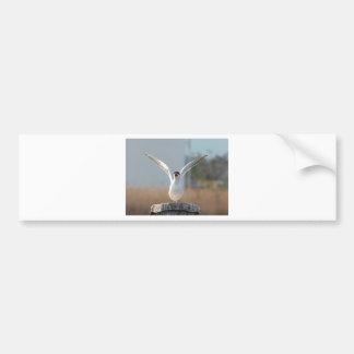 pássaros adesivo para carro