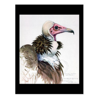 Pássaros Arte-Abyssinian 10 de Chicago do Cartão Postal