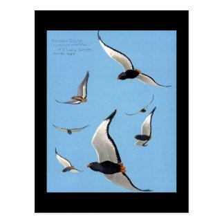 Pássaros Arte-Abyssinian 13 de Chicago do Cartão Postal