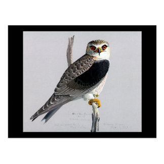 Pássaros Arte-Abyssinian 17 de Chicago do Cartão Postal