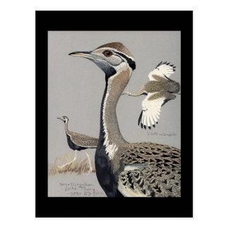 Pássaros Arte-Abyssinian 4 de Chicago do Cartão Postal