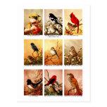 Pássaros Cartões Postais