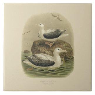 Pássaros da ciência NZ do vintage - albatrozes de