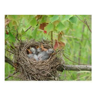 Pássaros de bebê cartao postal