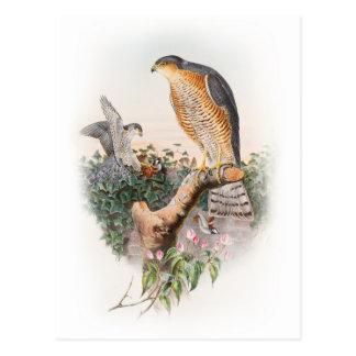 Pássaros de John Gould do falcão de pardal de Grâ Cartão Postal