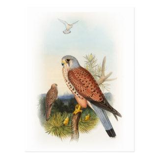 Pássaros de John Gould do falcão do Kestrel de Grâ Cartão Postal