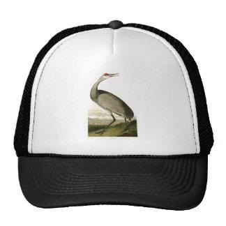 Pássaros de John James Audubon do guindaste de Boné