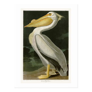 Pássaros de John James Audubon do pelicano branco Cartão Postal