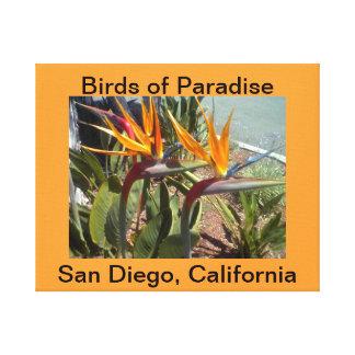 Pássaros de paraíso San Diego CaliforniaCanvas Impressão Em Canvas