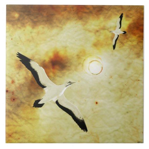 Pássaros de The Sun Azulejos