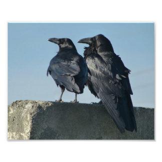 Pássaros do amor impressão de foto
