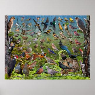 Pássaros do quintal do poster ocidental