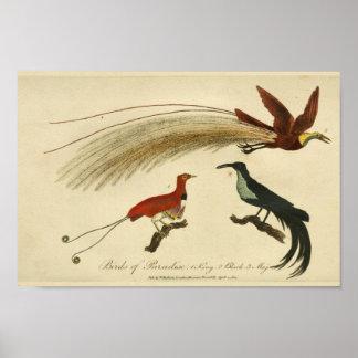 Pássaros do vintage do impressão da história