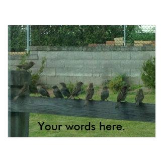Pássaros dos pardais em um trilho seus cartão das