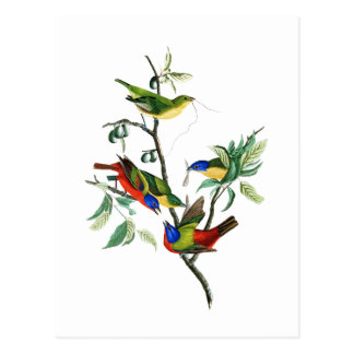 Pássaros pintados de John James Audubon do Cartão Postal