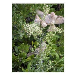 Pássaros & plantas cartão postal