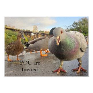 Pássaros que alimentam o convite