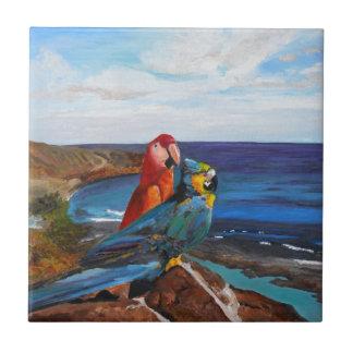 Pássaros tropicais que negligenciam a baía