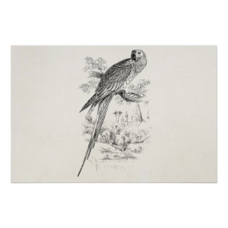 Pássaros verdes de Maccaw do pássaro do Macaw dos Pôster