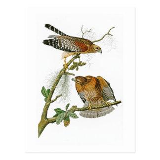 pássaros Vermelho-empurrados de John Audubon do Cartão Postal