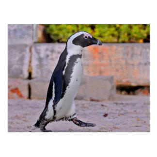 Passeio africano do pinguim cartão postal