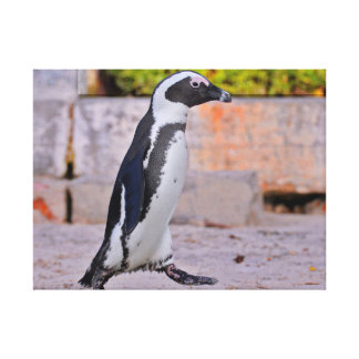 Passeio africano do pinguim impressão em tela