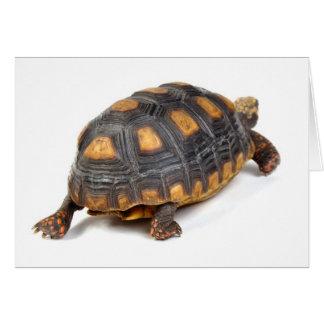 Passeio da tartaruga de Redfoot Cartão Comemorativo