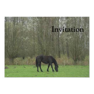Passeio preto do cavalo convite 12.7 x 17.78cm