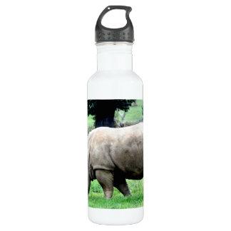 Pastando o rinoceronte branco