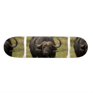 Pastando o skate do búfalo de água