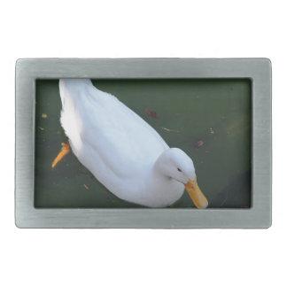 Pato branco
