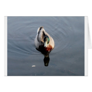 pato cartão comemorativo
