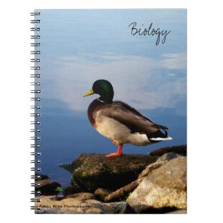 Pato em rochas cadernos