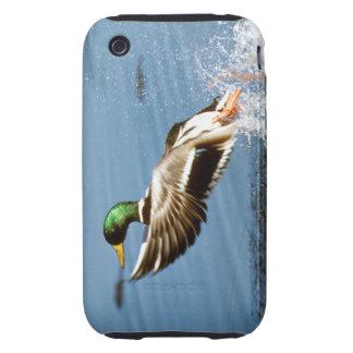 Pato selvagem - cobrir do iPhone 3G/3GS