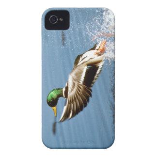 Pato selvagem - cobrir do iPhone 4/4S Capa Para iPhone