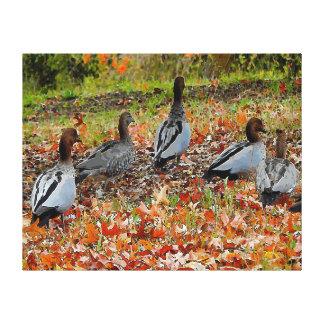 Patos da cópia das canvas no outono