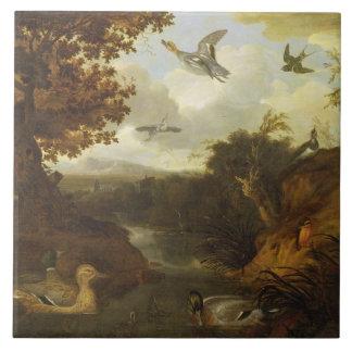 Patos e outros pássaros sobre um córrego em um