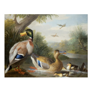 Patos em uma paisagem do rio cartão postal