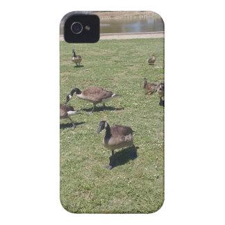 Patos no capa de iphone 4 da natureza