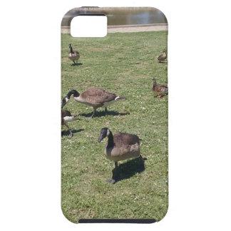 Patos no caso do iPhone 5 da natureza Capa Tough Para iPhone 5