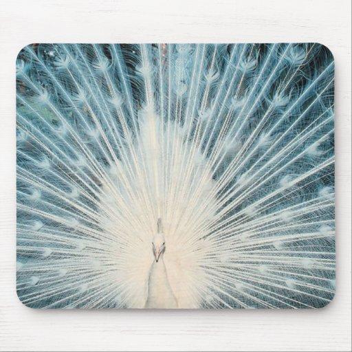Pavão branco bonito mouse pads