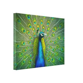Pavão - canvas de arte 18x24 dos animais selvagens impressão em tela canvas