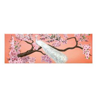 Pavão da flor de cerejeira impressão de foto