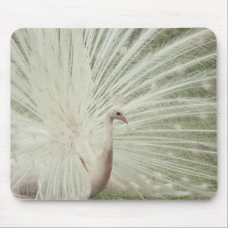 Pavão do albino mouse pad