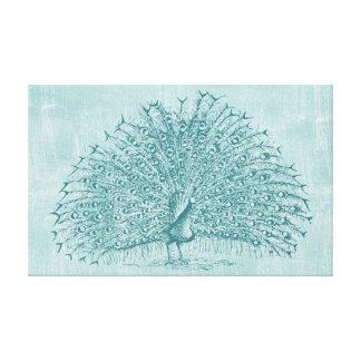 Pavão do Aqua Impressão Em Canvas