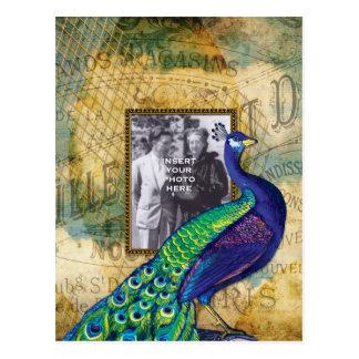Pavão do vintage no quadro de Paris Cartão Postal